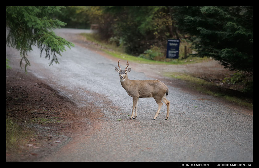 Salt Spring Roadblock