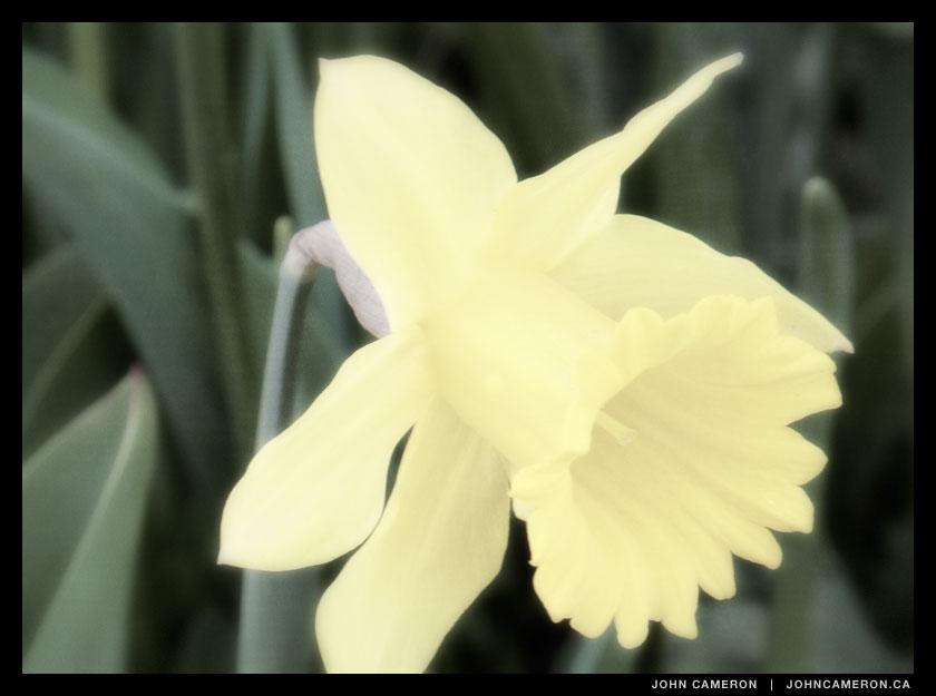 Easter Daffy