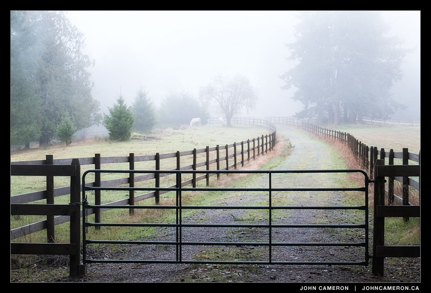 Horses on a foggy Salt Spring morning