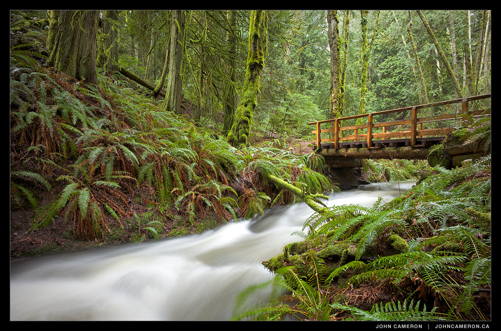 Creekside Rainforest Bridge