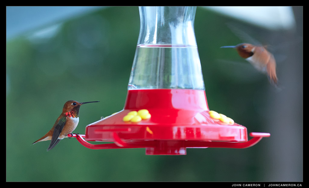 Evening Hummingbirds