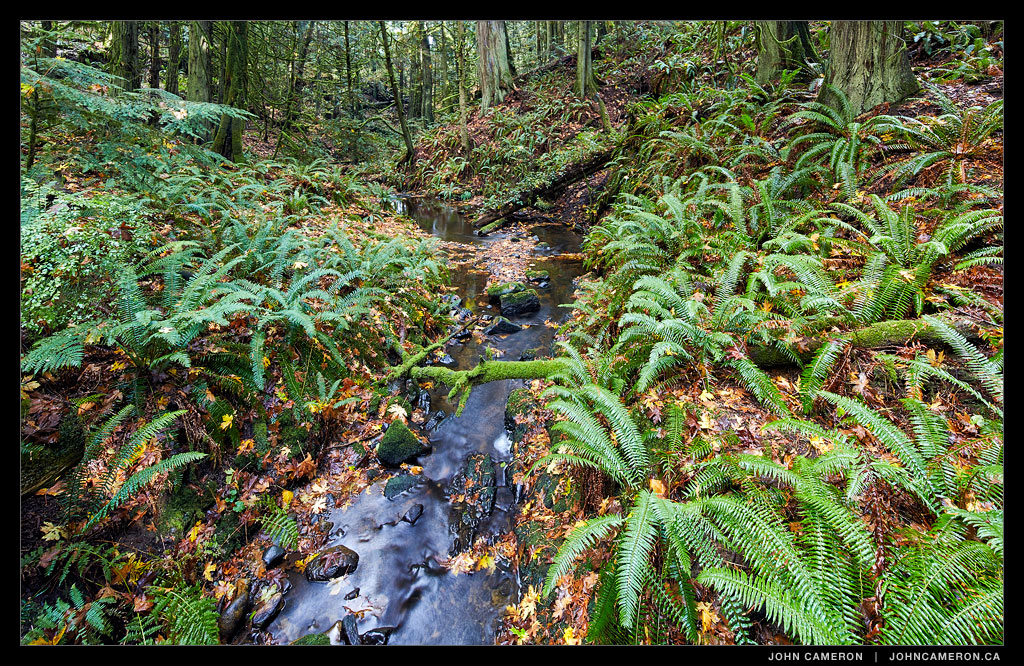 Stream in a Salt Spring Forest