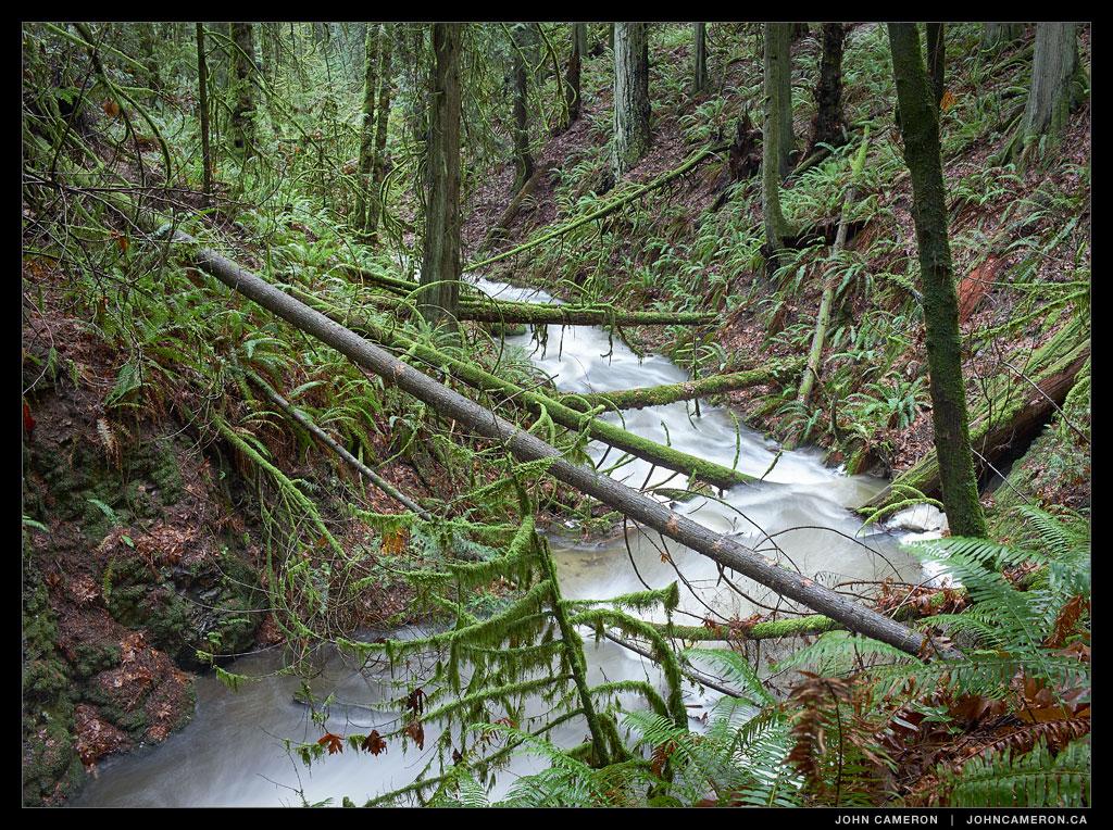 Creekside Rainforest on Salt Spring Island