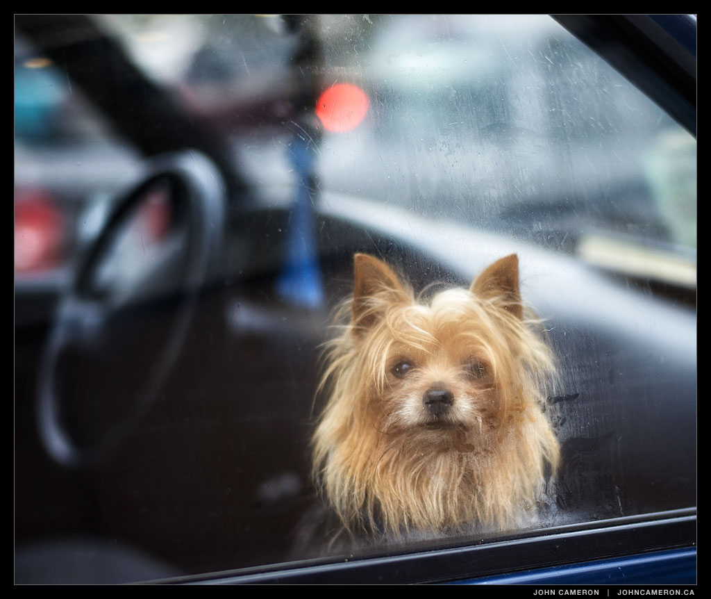 Dog in car in parking lot