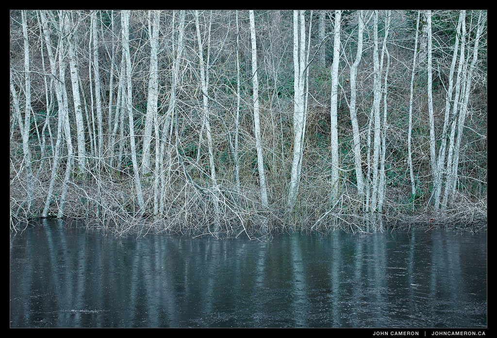 Winter Alders by a Pond