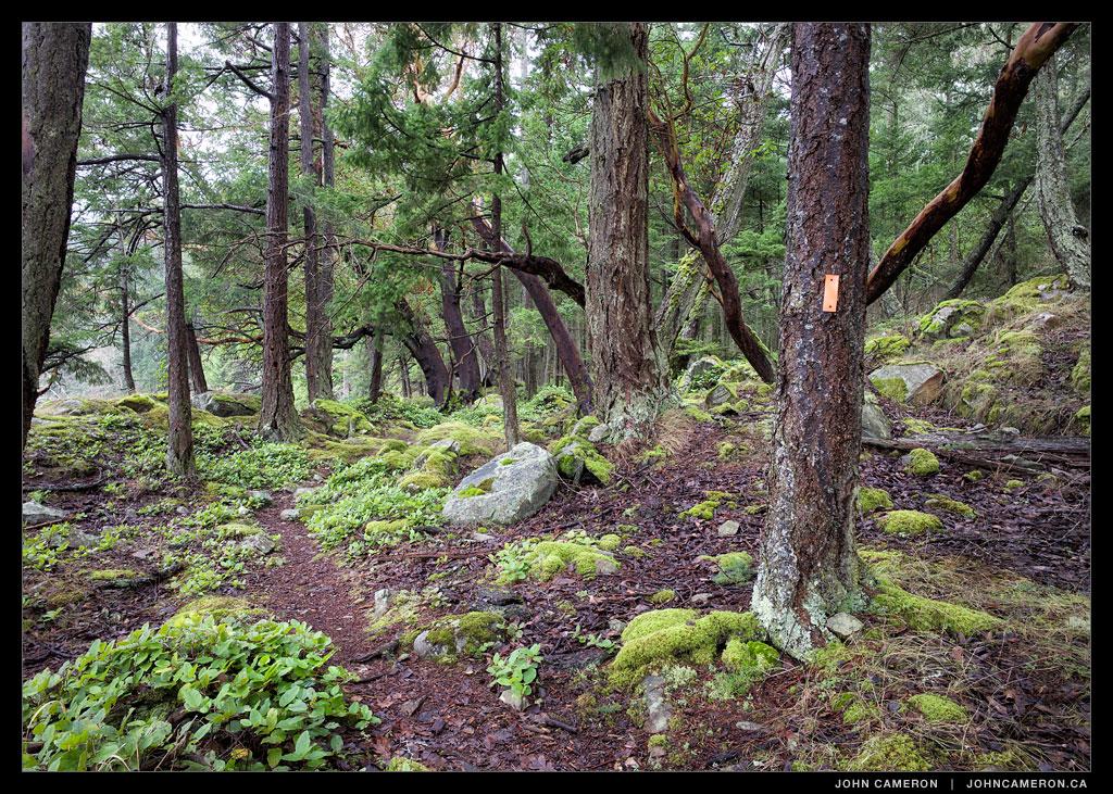 Yeo Point via Chris Hatfield Trail