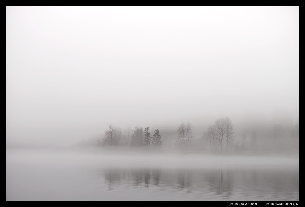 jc_Trees in Fog