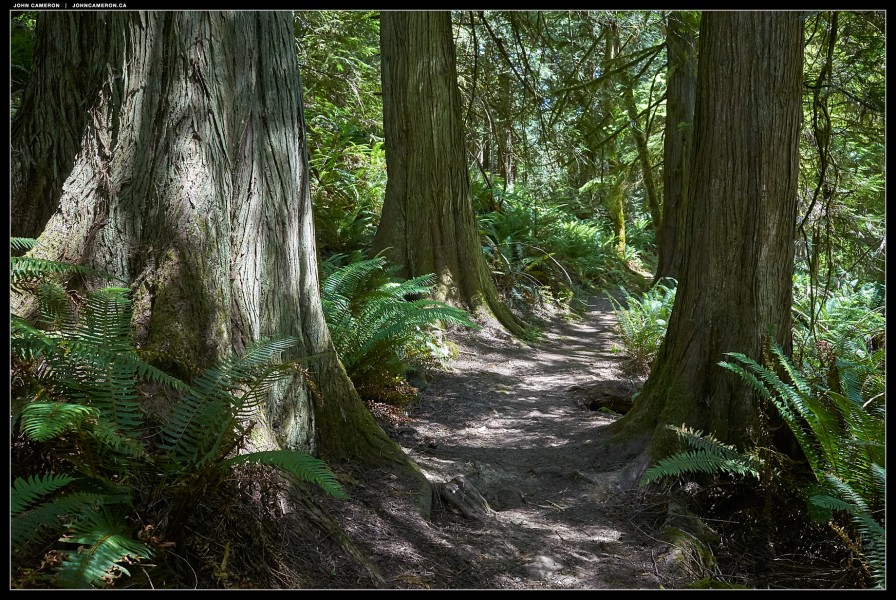 Dunbabin Park Rain Forest Trail