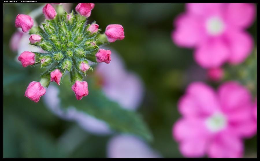 Beth's Flowers