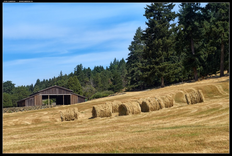 Salt Spring Hay Field and Barn