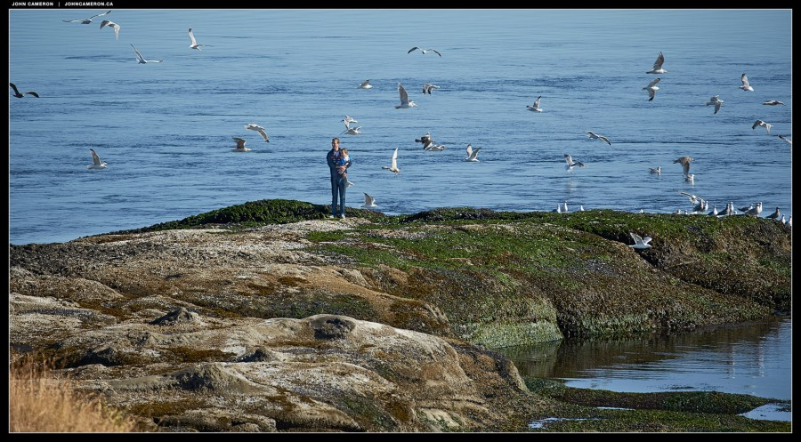 With Gulls
