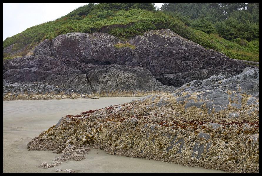 Shoreline Sculpture