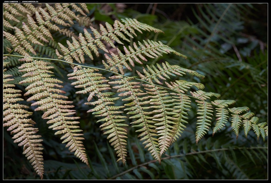 Light on a Fern