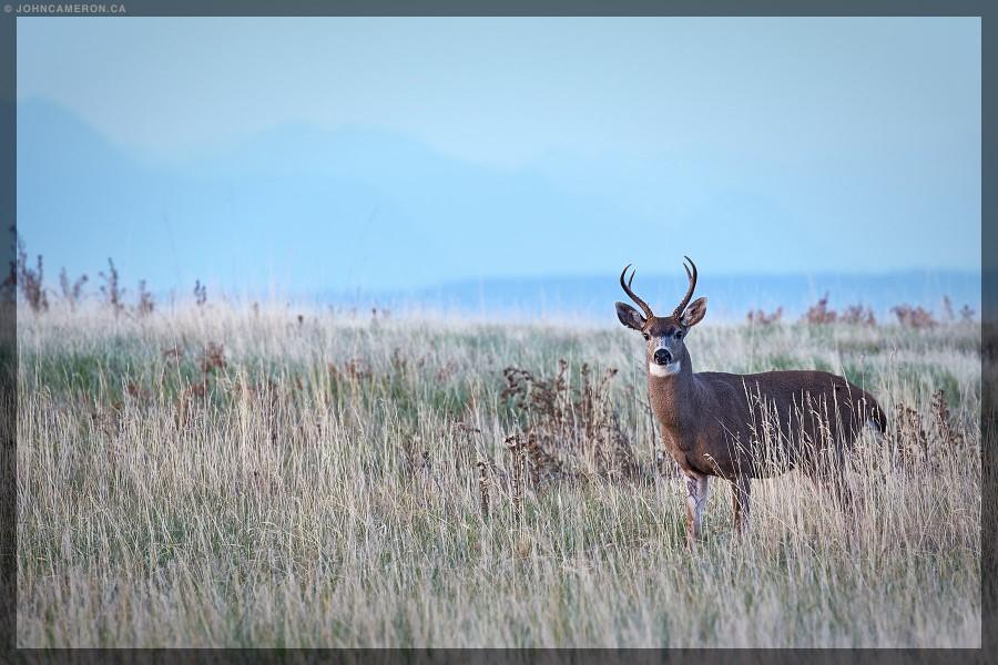 deer-15-09-238773-1