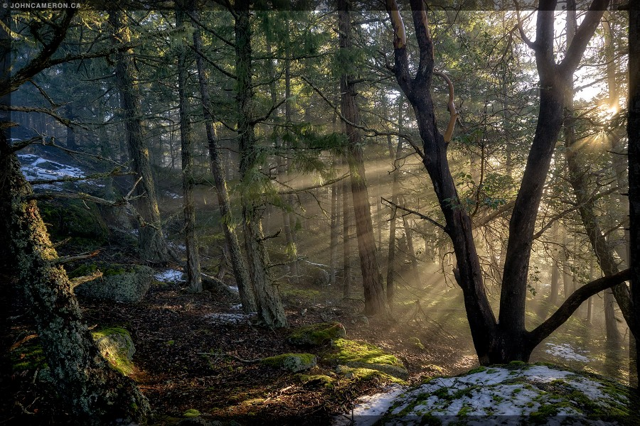 Daybreak on a Salt Spring Island Trail