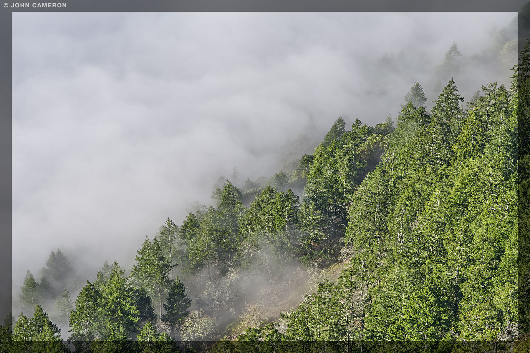 Low Cloud and Fog at Mount Maxwell