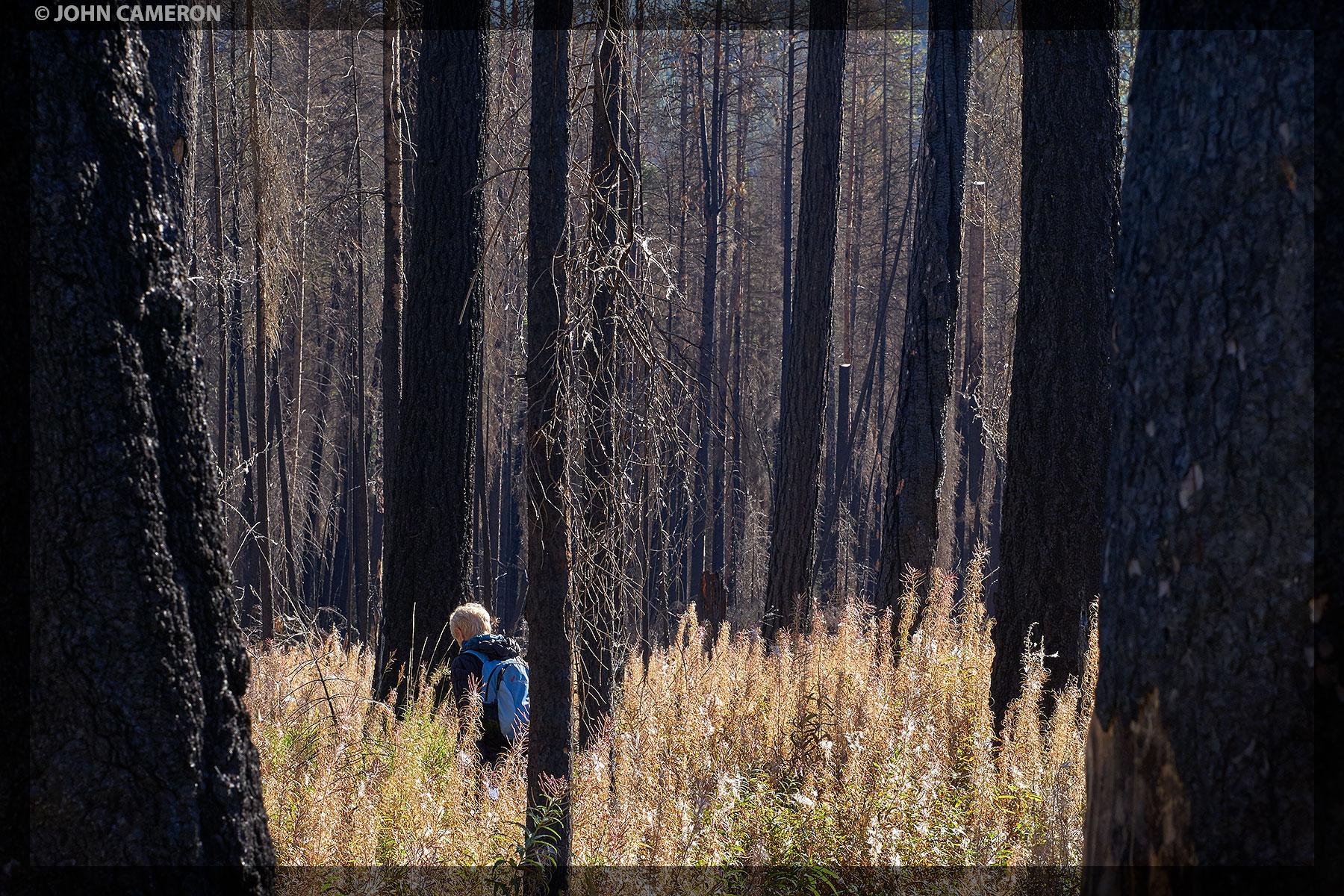 Wildfire Walk