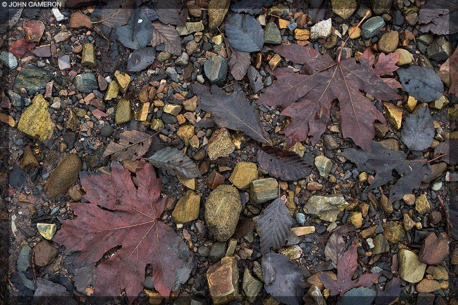 Gorgeous Autumn Beach Colour