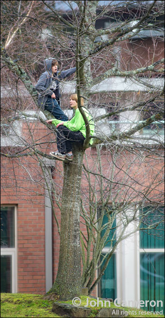 Saltspring Tree Climbers