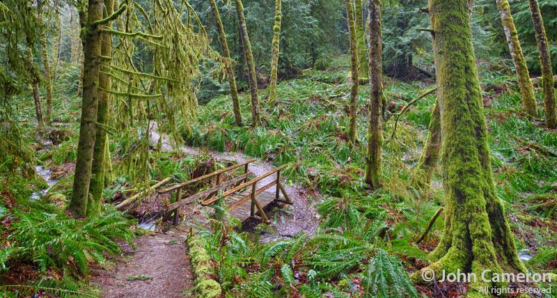 Dunbabin Rainforest on Salt Spring Island