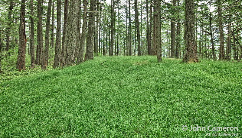 grassy Mount Maxwell forest