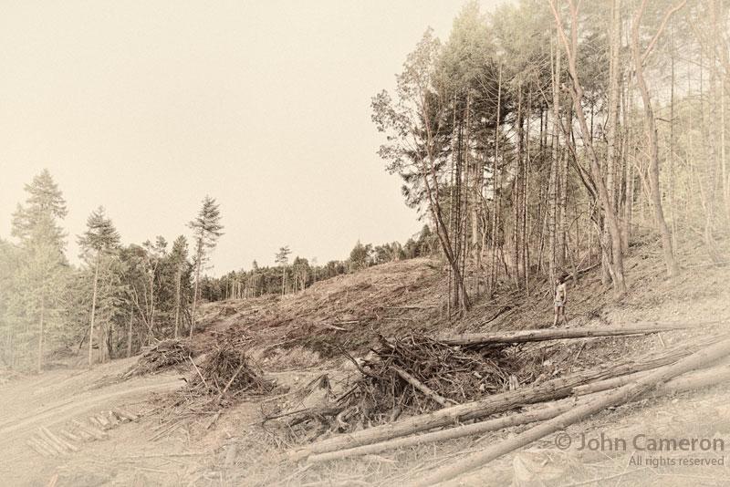 Salt Spring Island, deforested