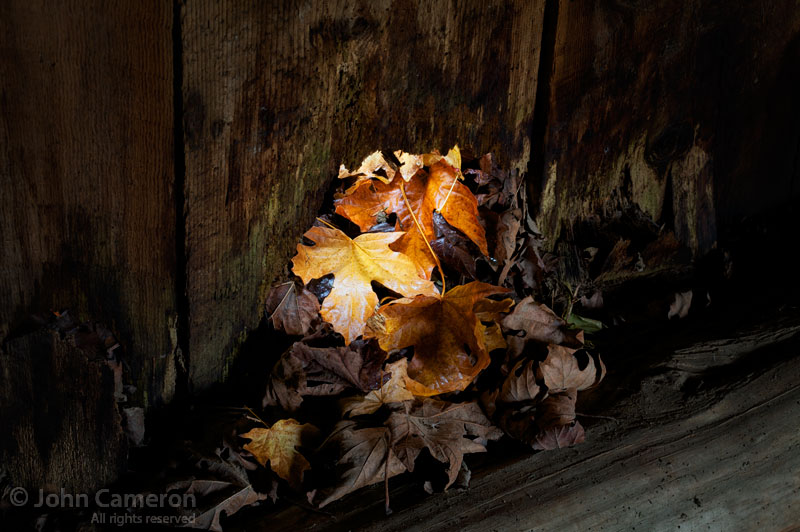 fall leaves in old saltspring barn