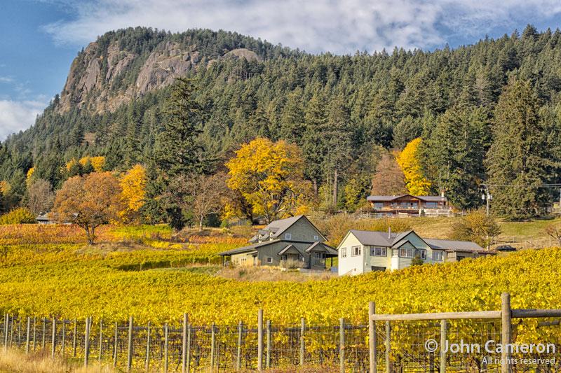 garry oaks winery, salt spring island