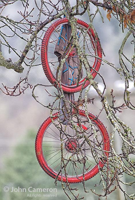 more tree hanging