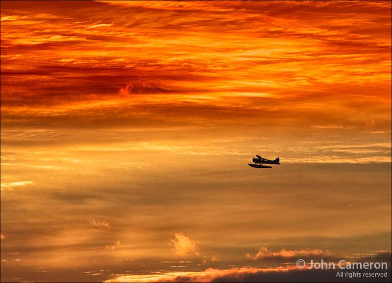 Dawn Flight from Salt Spring Island