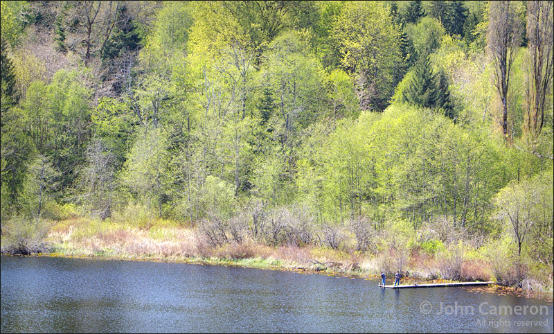 salt spring island lake in spring