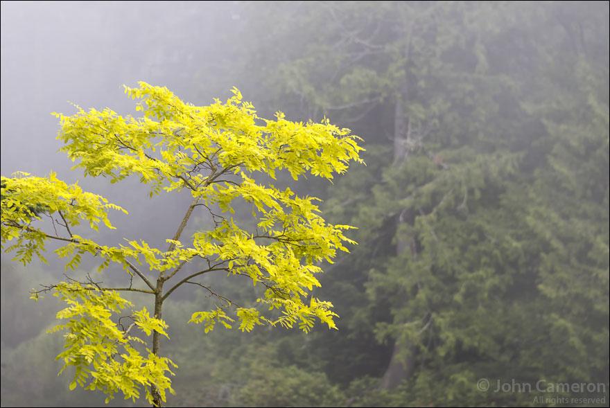 Fog Green