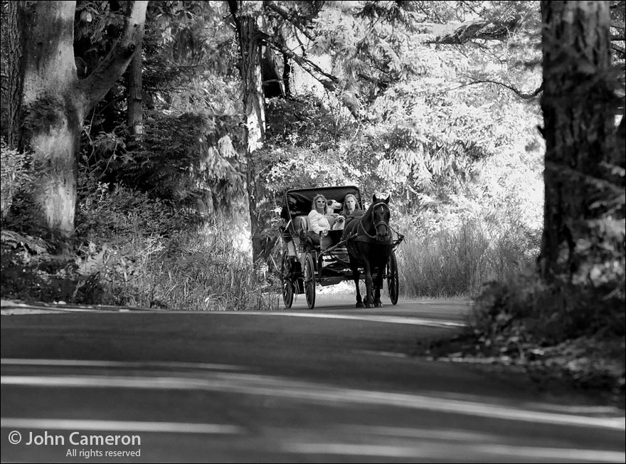 Horse carriage on Upper Ganges Road