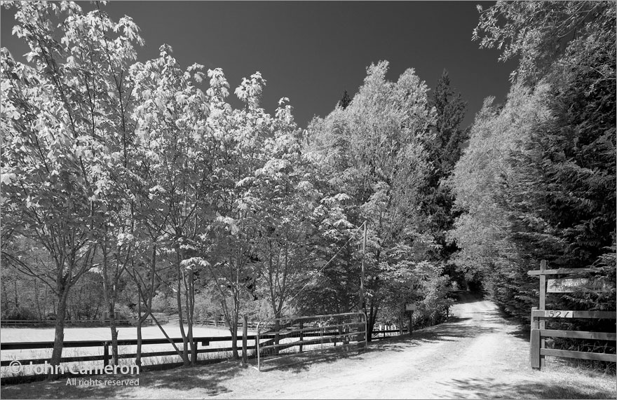 Quintessential Salt Spring Driveway in black and white