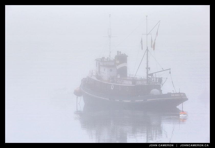 Seahorse in September 28 Fog
