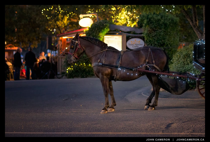Horse and Carriage outside the Tree House Cafe