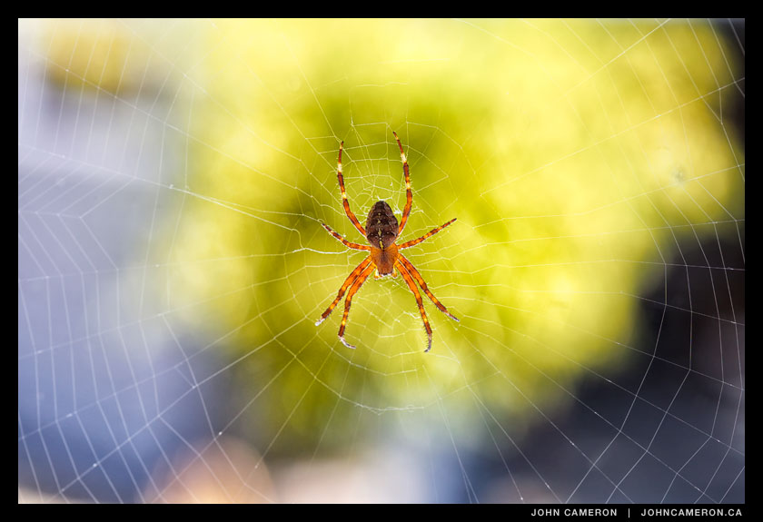 window decoration, a spider