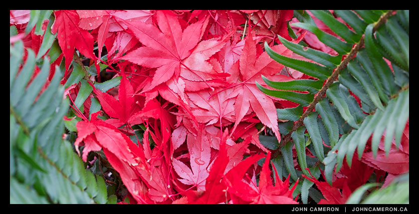 December's Red and Green