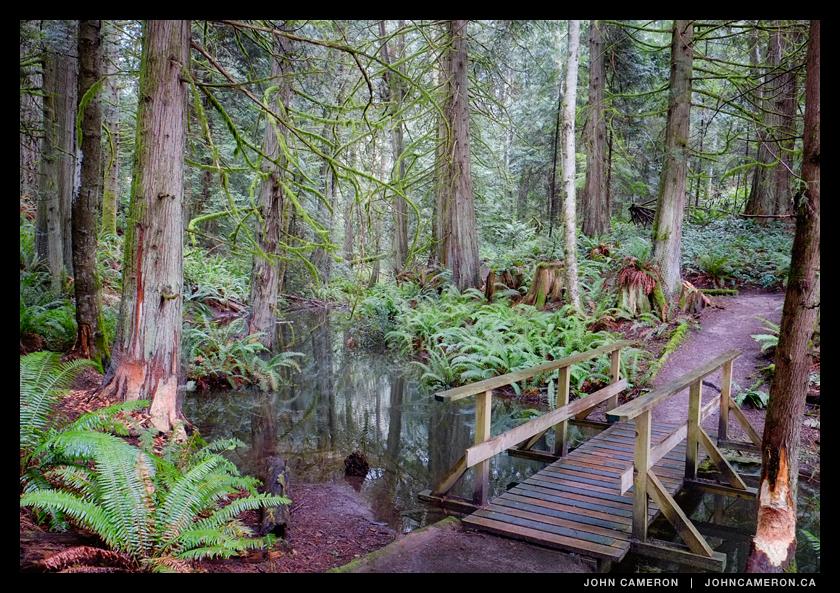 Beavers expanding their territory again at Dunbabin