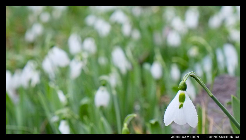 Snowdrops at the Skatepark