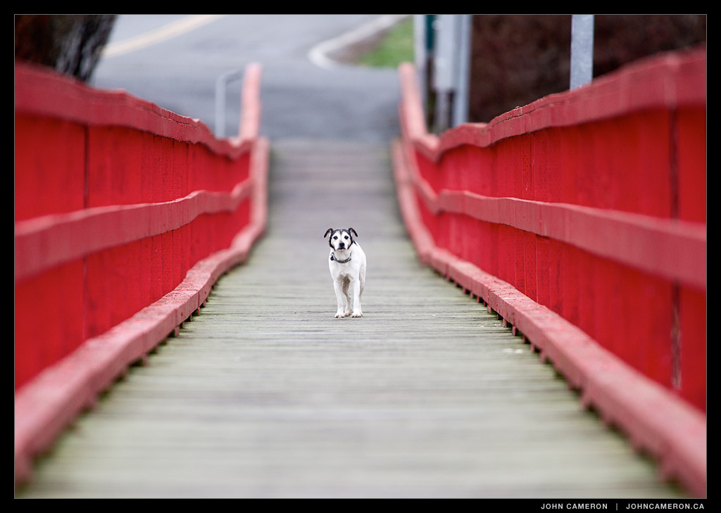 Dog on Fernwood Pier