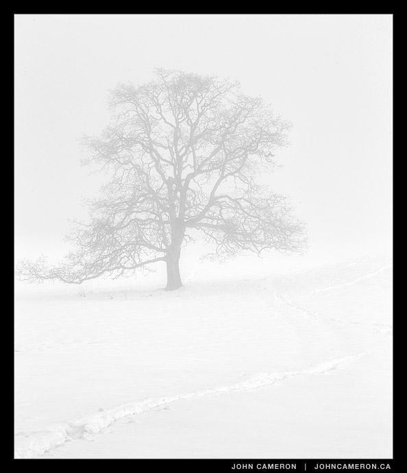 Channel Ridge Tree