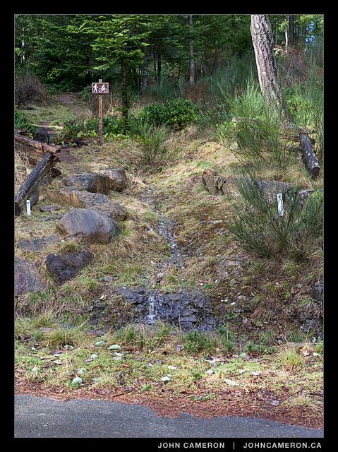 Dog Walk Trail