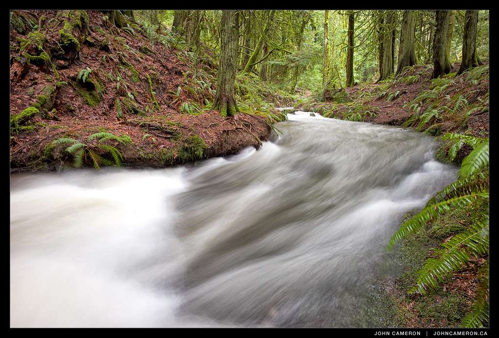 Creekside Rainforest, Salt Spring Island