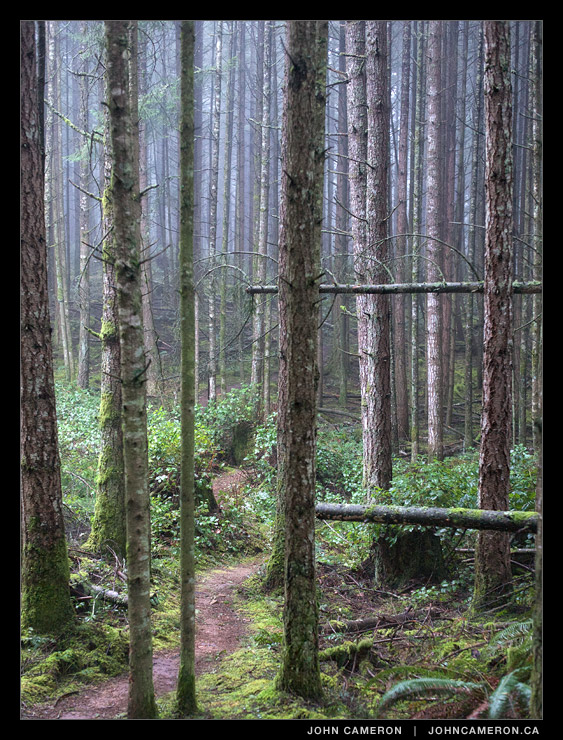 Forest Path on Salt Spring Island
