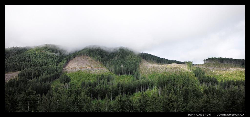 Vancouver Island: Logged
