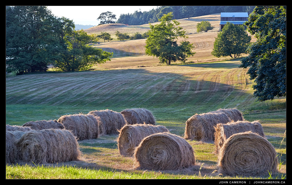 hay at a Salt Spring farm