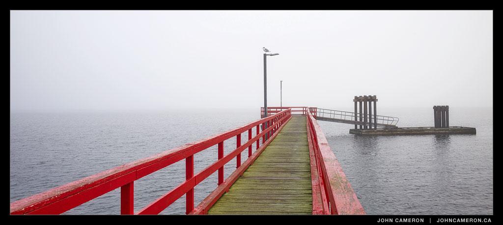 Fog at Fernwood