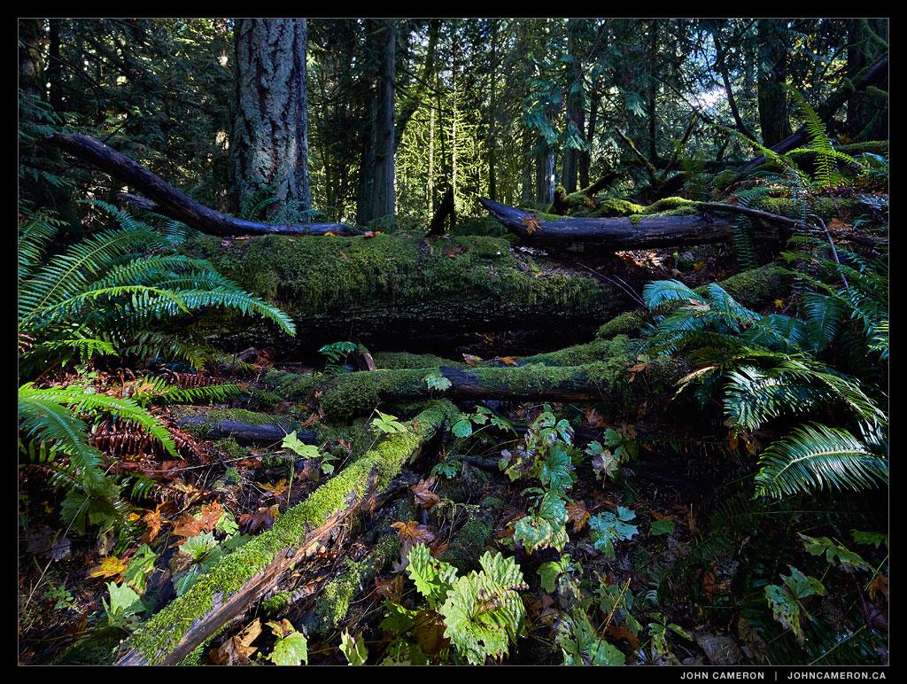 Forest Path on Salt Spring Island