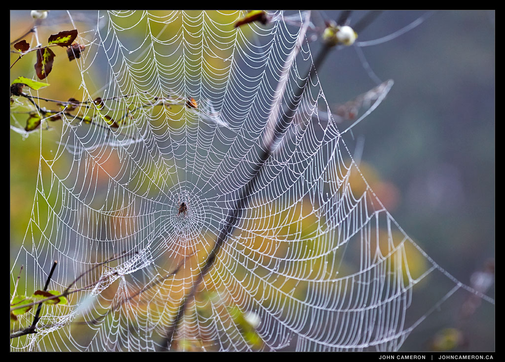 Spider Web on foggy Morning